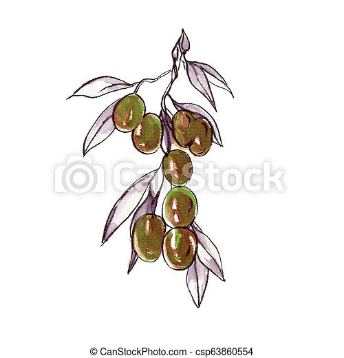 olives, branche - csp63860554