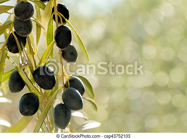 Olives on a bokeh background - csp43752103