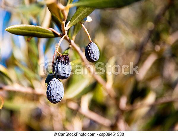 Olives - csp39451330