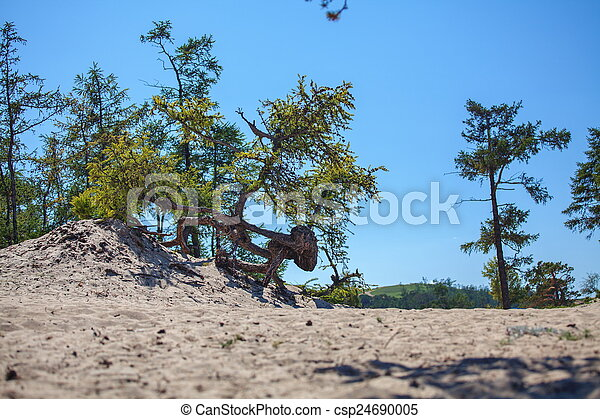 Olkhon Island - csp24690005