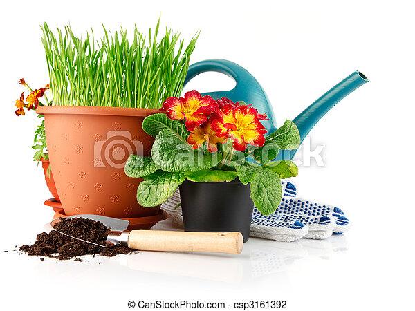 Hierba verde en la olla con flores rojas - csp3161392
