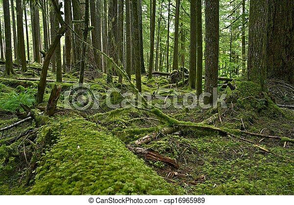 Olympic Rainforest - csp16965989