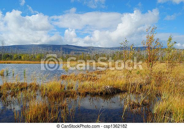On coast of lake - csp1362182