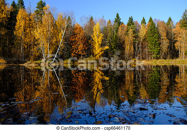 on the shore of a lake in autumn - csp66461170