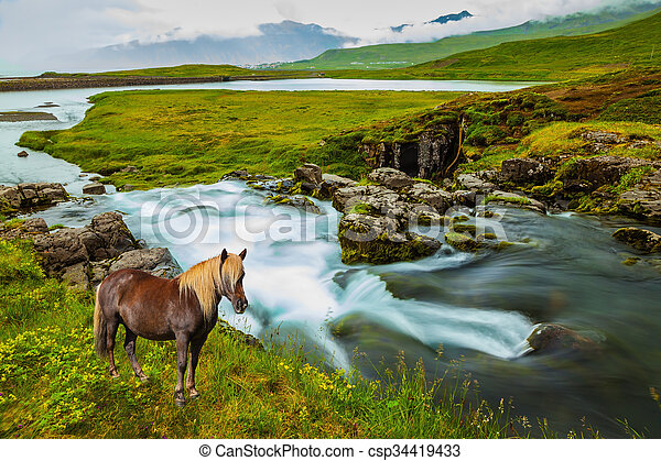 On the shore of waterfall horse grazing - csp34419433