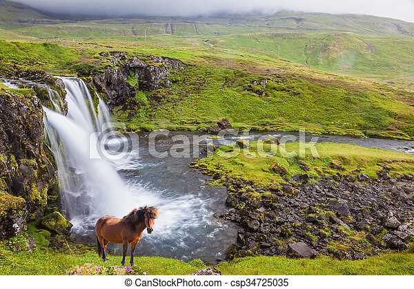 On the shore of waterfall Icelandic horse grazing - csp34725035