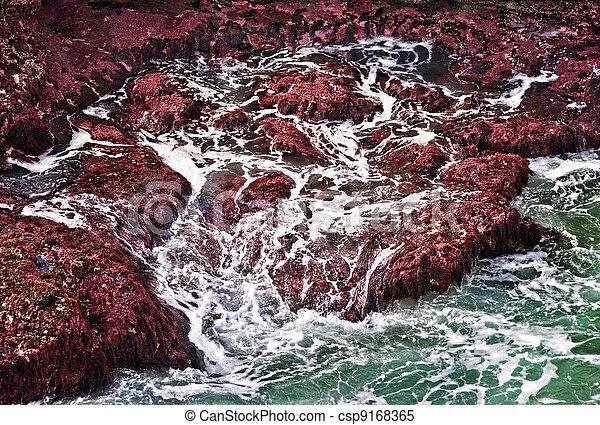 ondas, oceânicos, pedras - csp9168365