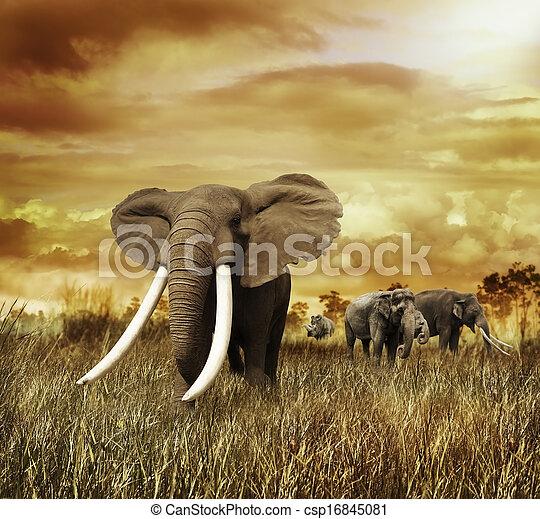 ondergaande zon , olifanten - csp16845081