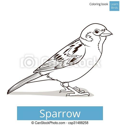 onderwijs, mus, spel, vector, leren, vogels - csp31488258
