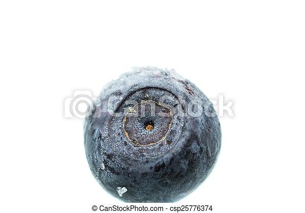 One frozen blueberry. Macro. Shallow depth of field - csp25776374