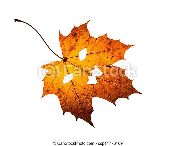 One leaf with Jack-O -Lantern cutout on white background - csp11776169