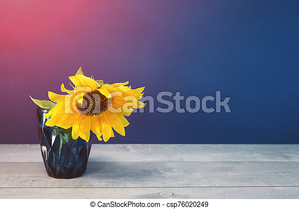one Sunflower in blue water glass on blue background - csp76020249