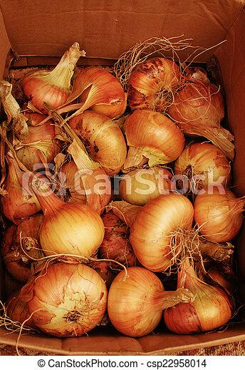 onion in the box - csp22958014