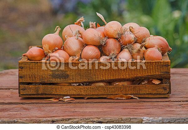Onion in wooden box - csp43083398