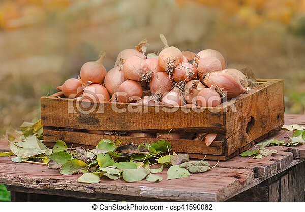 Onions in a box - csp41590082