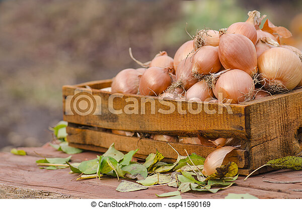 Onions in a box - csp41590169