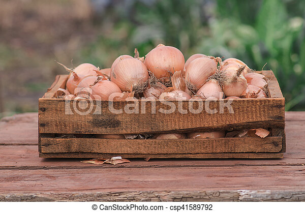 Onions in a box - csp41589792