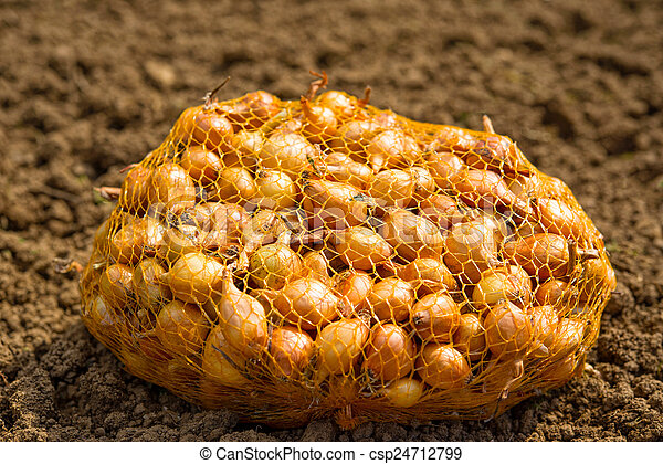 Onions in a Sack - csp24712799