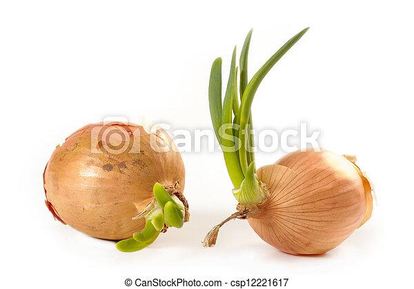 onions - csp12221617