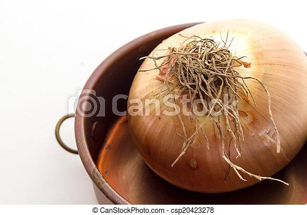 Onions - csp20423278