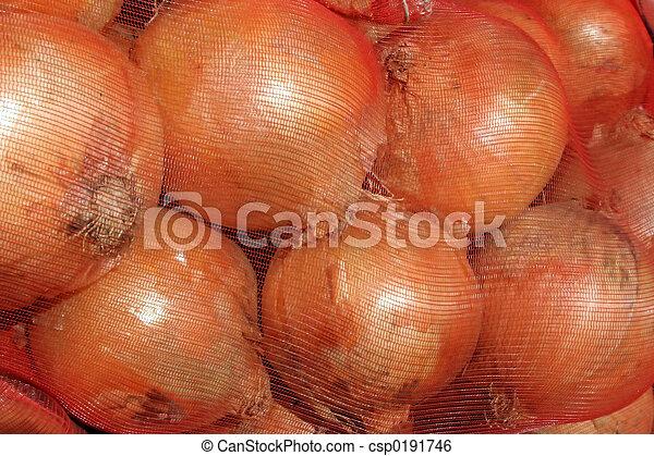 Onions - csp0191746