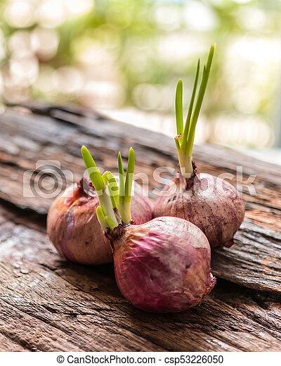 Onions - csp53226050
