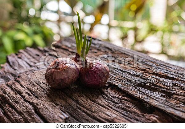 Onions - csp53226051