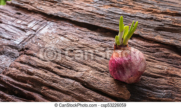 Onions - csp53226059