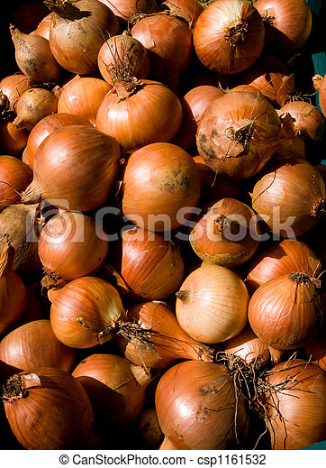 onions - csp1161532