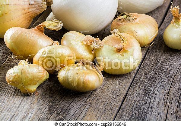 Onions. - csp29166846
