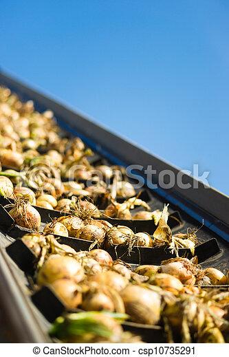 onions - csp10735291