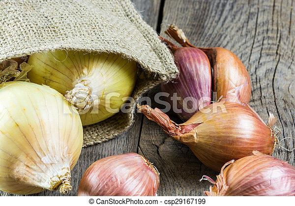 Onions. - csp29167199