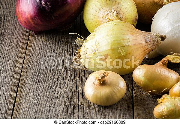 Onions. - csp29166809