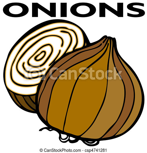 an image of two onions vector clip art search illustration rh canstockphoto com green onion clipart free Green Onions