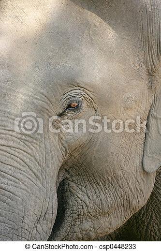 oog, elefant - csp0448233