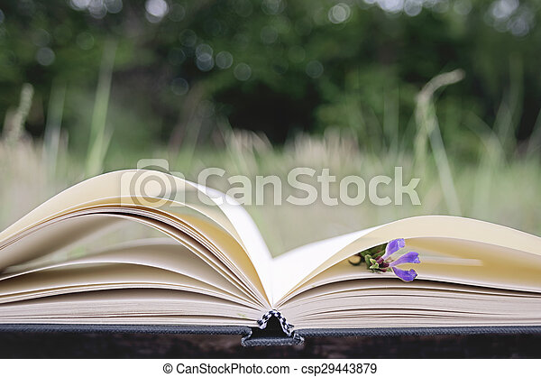 Opened book, blank pages - csp29443879