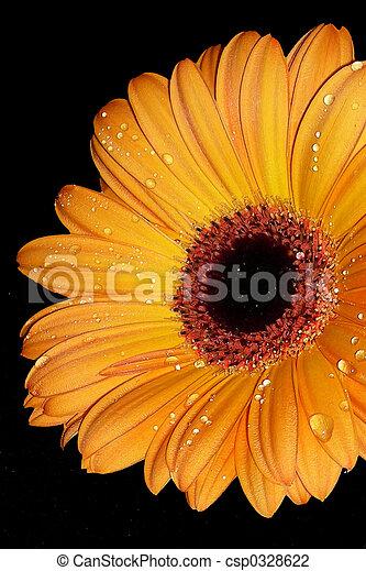 orange, éclater - csp0328622