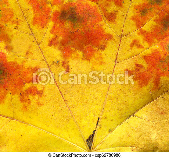 Orange autumn leaf macro - csp62780986