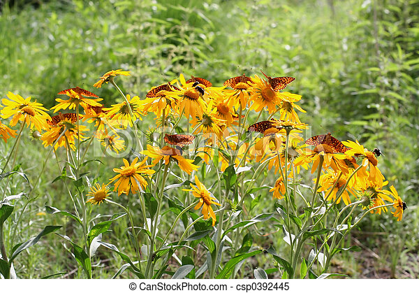 orange butterflies o - csp0392445