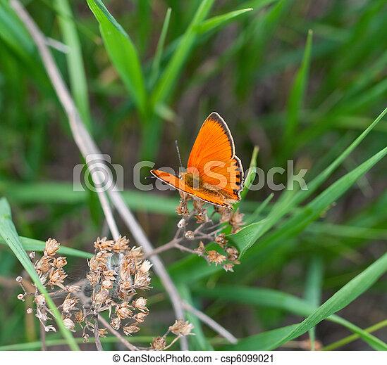orange butterfly - csp6099021