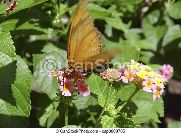 Orange Butterfly - csp0000705