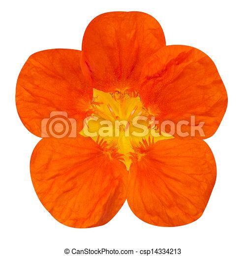 Dessin capucine fleur - Coloriage fleur capucine ...