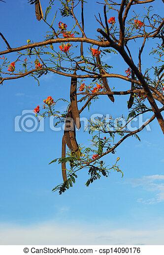 Orange flower against the sky. - csp14090176