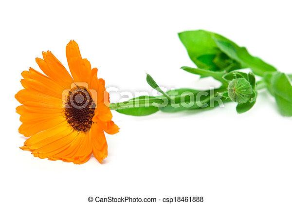 orange flower - csp18461888