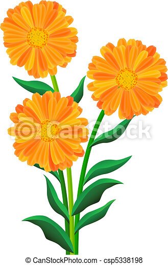 Orange Flowers Isolated On The White Vector