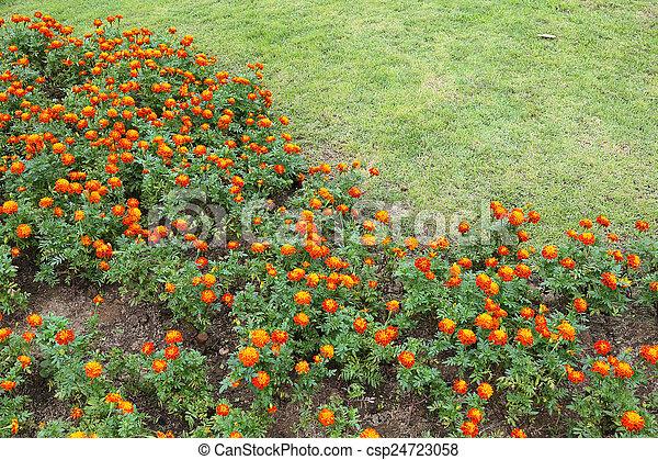 orange flowers in green grass garden - csp24723058