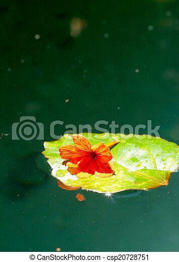 Orange flowers on green leaves. - csp20728751