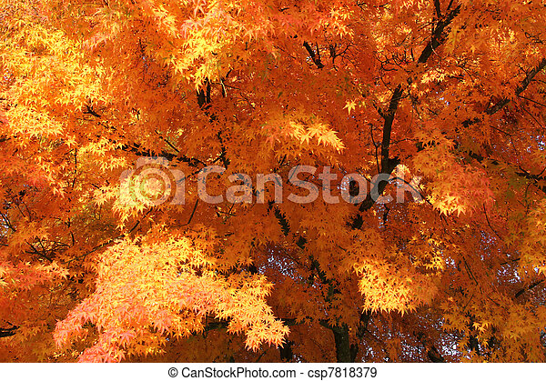 Orange leaves - csp7818379