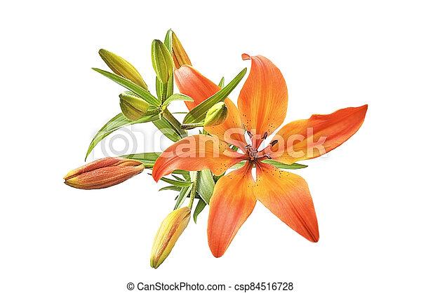 Orange lily on white isolated background - csp84516728