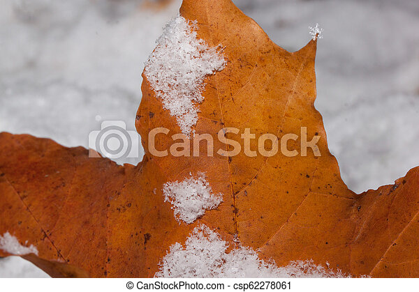 Orange maple leaf covered with hoarfrost. Close up. - csp62278061